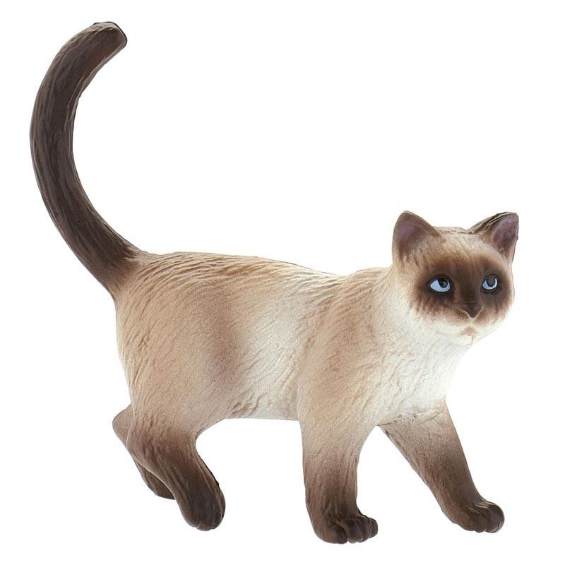 Gato Doméstico Kimmy