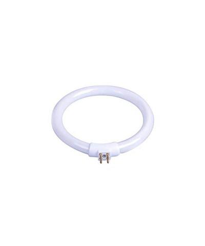 Fluorescente Circular 11w 4 Pins