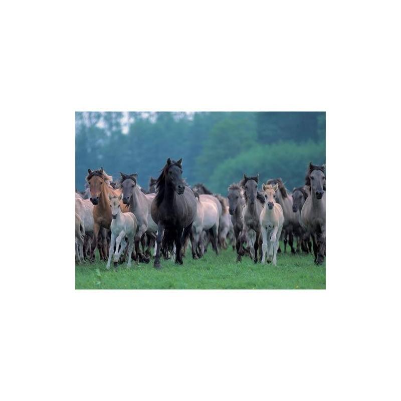 191871. Puzzle Ravensburger 1000 piezas Manada de caballos