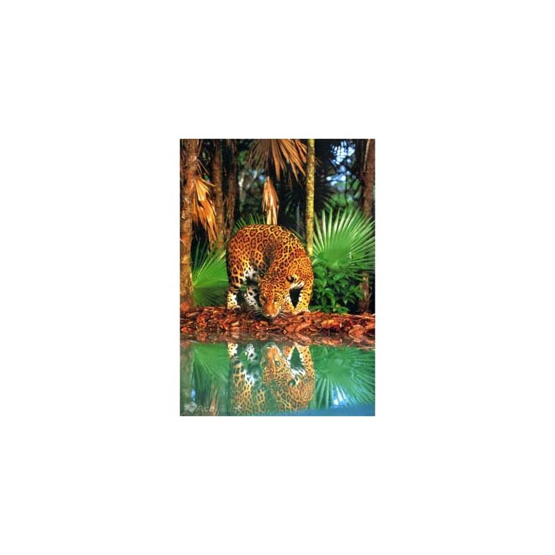 31935. Puzzle Clementoni 1500 piezas Leopard
