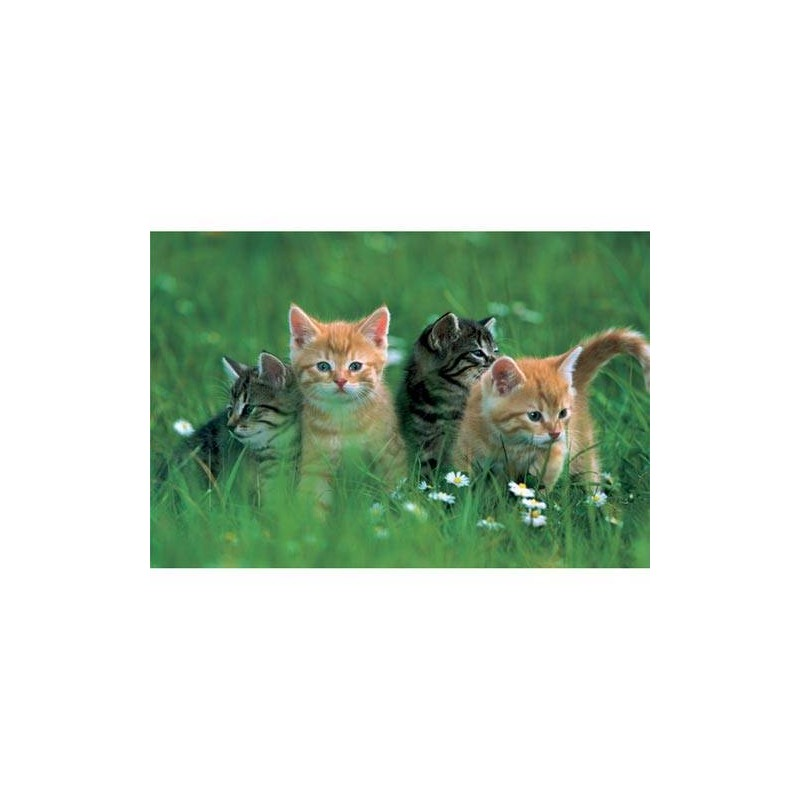 "16095. Puzzle Trefl 100 piezas, Four Kittens ""Cuatro gatitos"""