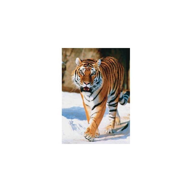 10135. Puzzle Trefl 1000 piezas Tigre Siberiano