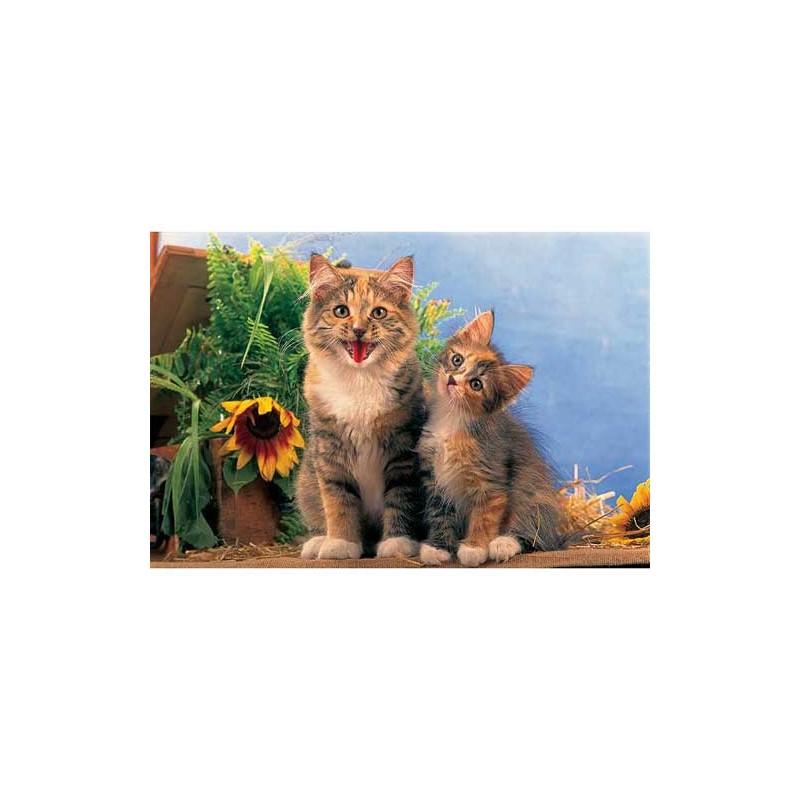 "15129. Puzzle Trefl 160 piezas Siberian Cats ""Gatos Siberianos"""