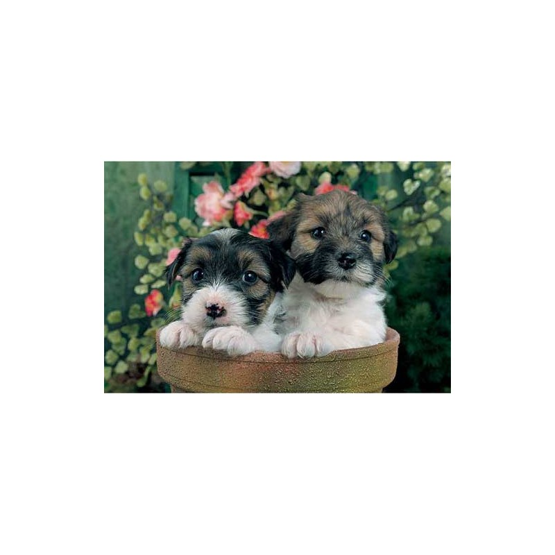 """18112. Puzzle Trefl 30 piezas Two Puppies """"Dos cachorros"""""""