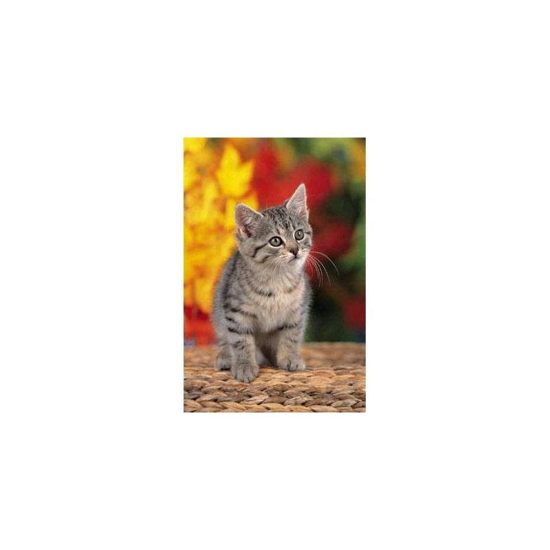 "18111. Puzzle Trefl 30 piezas Sweet Kitten ""Dulce gatito"""