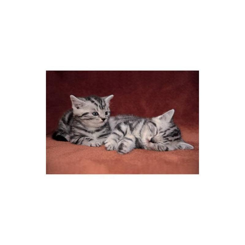 18113. Puzzle Trefl 30 piezas Delightful Kittens
