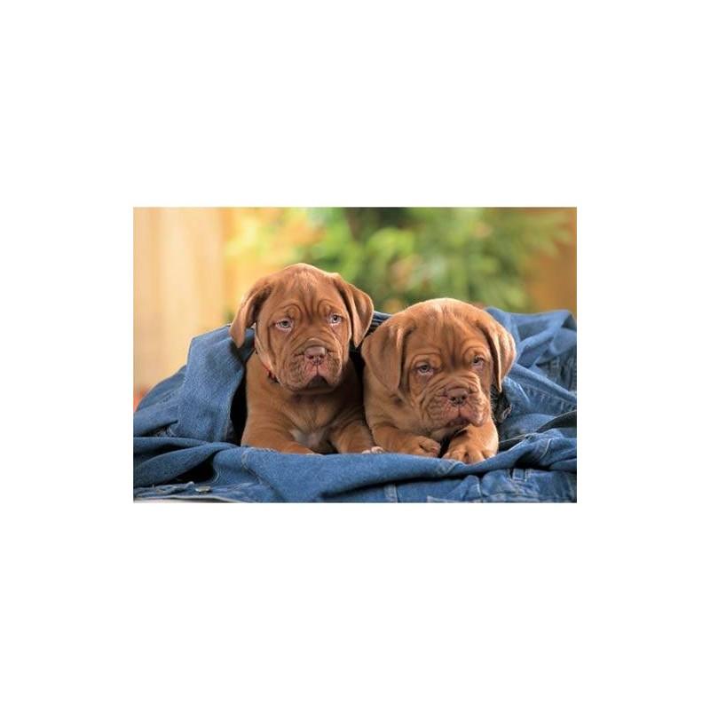 17128. Puzzle Trefl 60 piezas, Dogs de Bordeaux