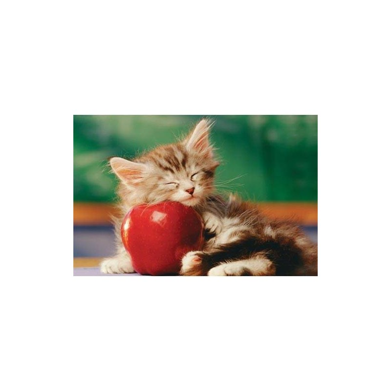 17080. Puzzle Trefl 60 piezas Sleeping Kitten with Apple