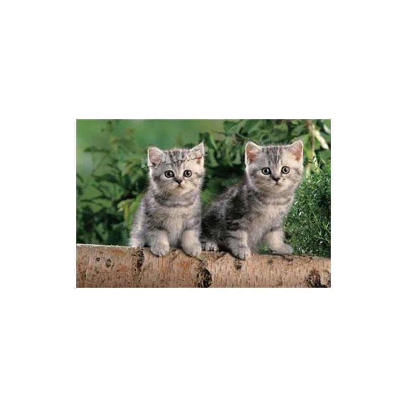 "17129. Puzzle Trefl 60 piezas Two Tiny Kittens ""Dos gatitos"""